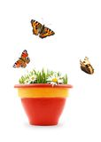 Nature in your pot. Isolated pot with grass, flowers and butterflies Stock Image