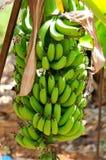 natured的香蕉 库存照片