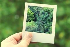 Naturel框架 免版税库存图片