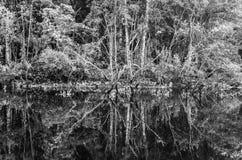 Naturel abstrait images libres de droits