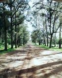 Naturel beauty in congo stock photos