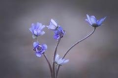Naturel bleu Photos libres de droits