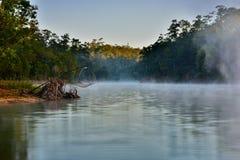Naturel en Thaïlande Photo libre de droits