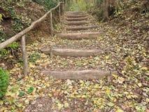 Naturel schodki w lesie podczas jesieni zdjęcie royalty free