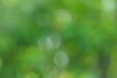 Naturel vert brouillé Photos libres de droits