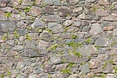Naturels antiques monopolisent la parole Image libre de droits