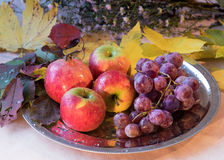 Naturemort con las frutas y las flores del otoño Foto de archivo libre de regalías