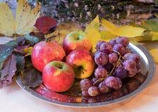 Naturemort mit Früchten und Blumen des Herbstes Lizenzfreies Stockfoto