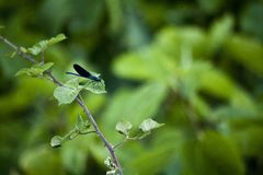 Naturen är den bästa tingthathen som vi har royaltyfria foton