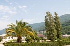 Naturen av Abchazien Fotografering för Bildbyråer