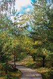 Naturen av Curonian spottar Royaltyfri Foto