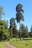 Naturen av den Leningrad regionen Arkivbilder