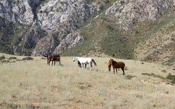 Naturen av Kirgizistan Arkivbild