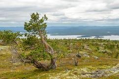 Naturen av norden Arkivfoton