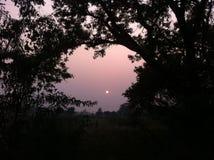 Naturen beauti lizenzfreie stockfotos