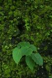 Naturen besitzen Farbe lizenzfreies stockfoto