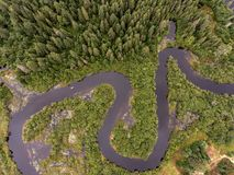 Naturen för modern för åder för sikten för ögat för fåglar för floden för fartyget för kanoten för den lösa Forest Canada aearial royaltyfri bild