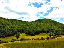 naturen fördunklar grönt gräs för träskogen Royaltyfria Bilder