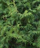 Naturen gräsplan, trädet, växten, skogen, bladet, filial, sörjer, arbeta i trädgården, flora, mossa, evergreen, ormbunken, busken arkivfoto