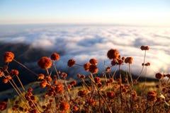 Naturen inspirerar Royaltyfri Fotografi