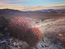 Naturen inspirerar Arkivfoto