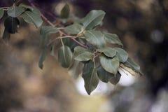 Naturen parkerar Royaltyfria Bilder