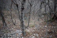 Naturen parkerar blå ` vaggar ` - Bulgarien, Sliven Royaltyfria Bilder