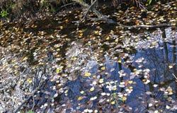 Naturen Ryssland, den ursnygga hösten landskap, Royaltyfria Bilder
