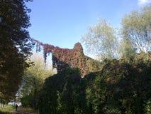 Naturen skapar mirakel Riktig tillväxt på staketet och ställningen, i form av en gigantisk man Arkivbilder