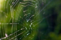 Naturen slut av en spindelreng?ringsduk med dagg tappar upp ultrarapid arkivfoto