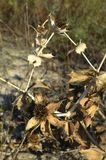 Naturen v?xten, tr?det, bladet, makroen, skogen, brunt som ?r torr, blomman, sidor, gr?splan, closeupen, gr?s, h?sten, textur, sp royaltyfria foton