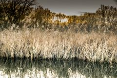 Naturens är första gräsplan guld- fotografering för bildbyråer