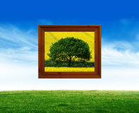Natures art Royalty Free Stock Photos