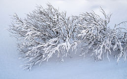Natures Art. View of a small bare bush covered in frozen snow Stock Images