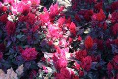 Natures beam of light Stock Photos