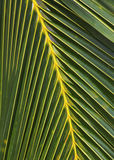 Natures design with Palm tree Hawaii. Pattern and Design in Natures with Palm tree, Hawaii Stock Images