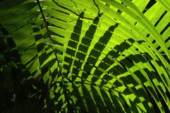 Natures light. Natural light creating shadows of a leaf onto a leaf Royalty Free Stock Photo