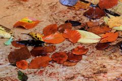 Natures Litter. A colour image of the affects of autumn on natures leaves. Mother natures litter lying on a concrete slab deck Stock Image