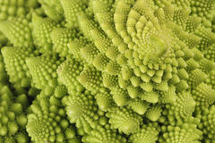 Natures own fractals Royalty Free Stock Image