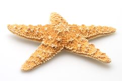 Natures Starfish. Starfish from oceans deep water on white background royalty free stock photography