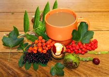 Natures Warm drink Royalty Free Stock Images