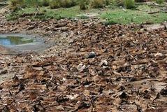 Natures Wasteland Stock Image
