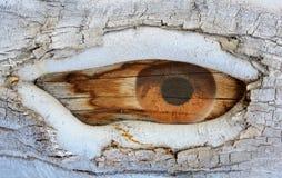 Natures Watchful Eye Royalty Free Stock Image