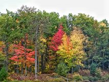 Natures wonders. Enjoying the colors of michigan Stock Images