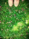 When I found little pink flowers on green grass field Royalty Free Stock Images