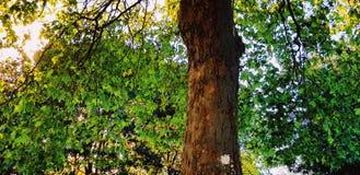 A natureza é bonita foto de stock