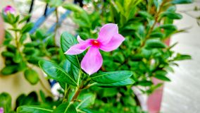 A natureza é nosso amor Foto de Stock Royalty Free