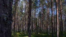 Natureza épico de Forest Slider Dolly Shot Sunny video estoque