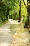 Natureza 117 Imagem de Stock