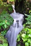 Natureza Fotografia de Stock Royalty Free